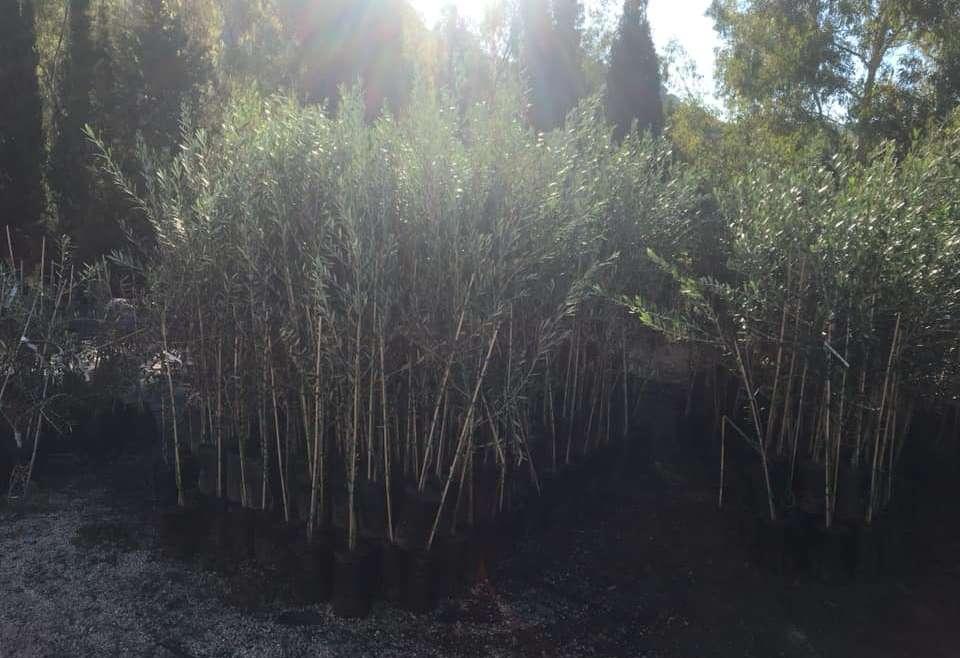 Forestali di varia specie